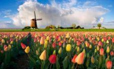 Verhuisbedrijf Select Movers Amsterdam
